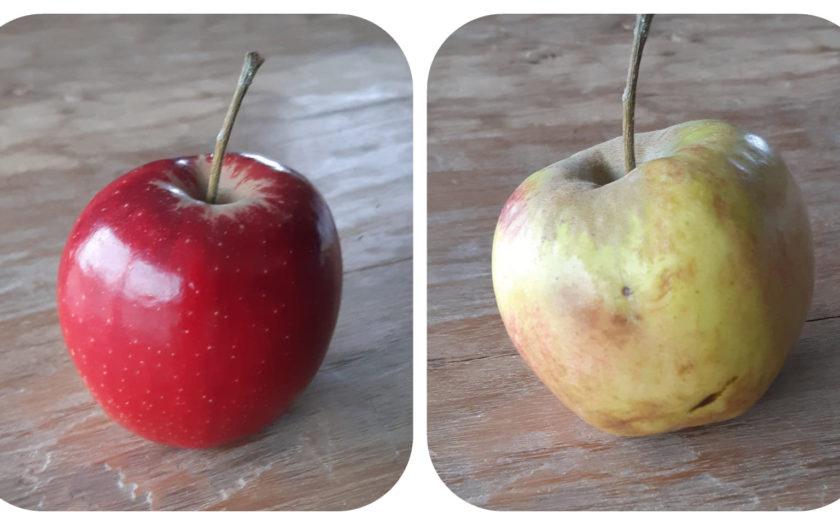 blozende appel oude appel
