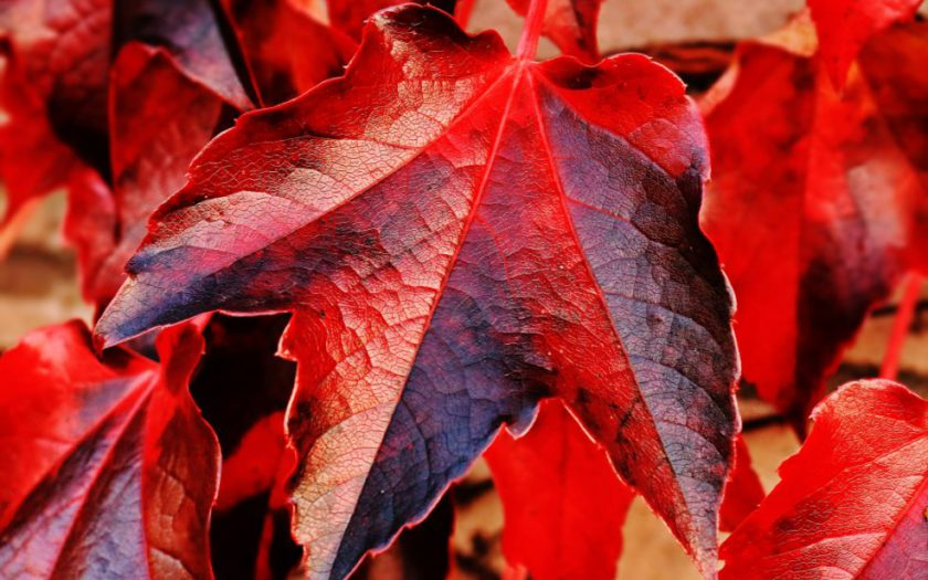 autumn leaf free pexel
